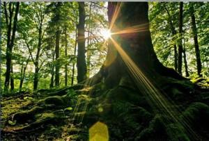 nature-heals