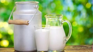Dairy milk has an important role in the Ayurvedic pharmacopeia