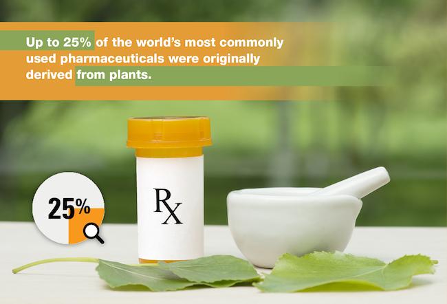 Pharmaceutical origins - plant based medicine